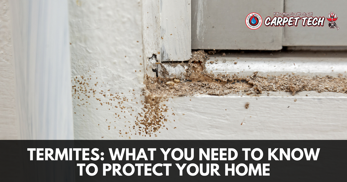 Termites: What You Need to Know to Protect Your Home