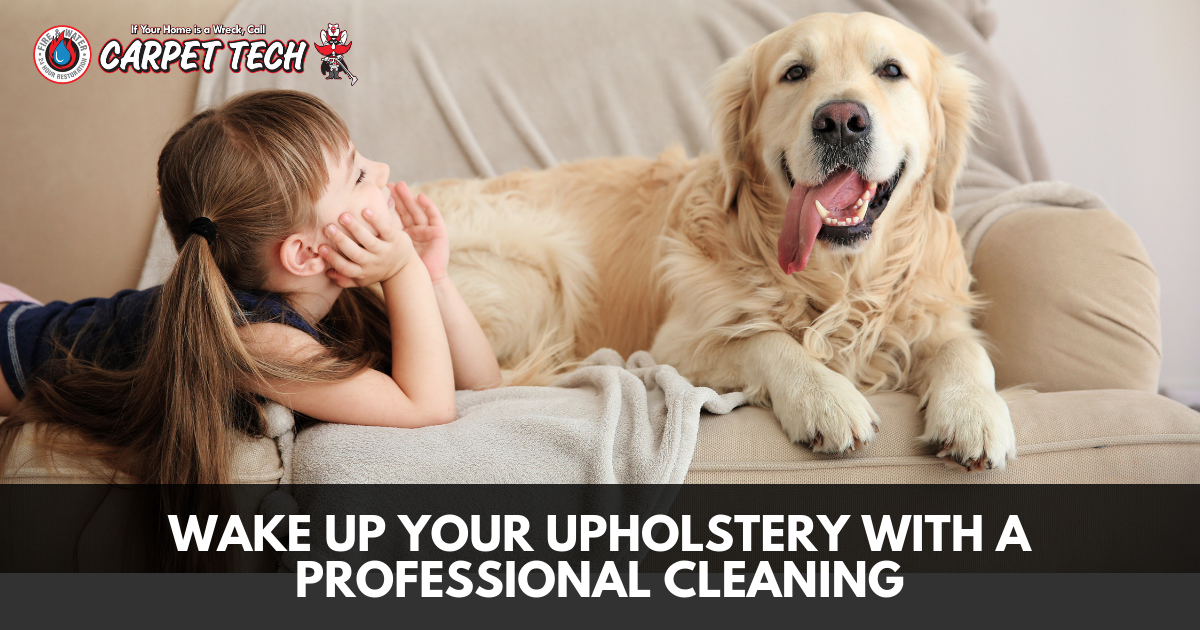 Wake Up Your Upholstery with a Professional Cleaning