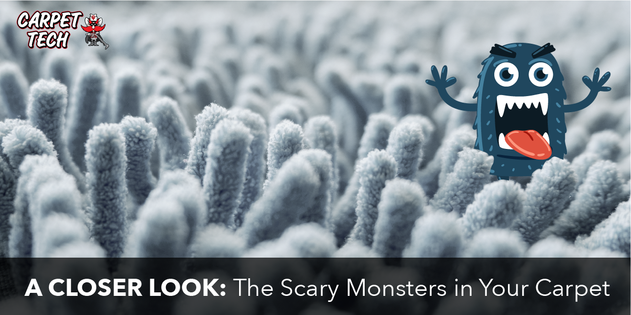 A Closer Look: The Scary Monsters in Your Carpet
