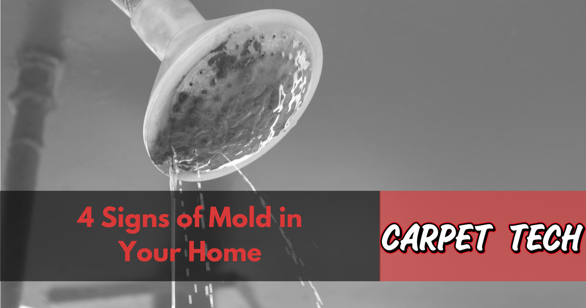 4 Signs of Mold in Your Home