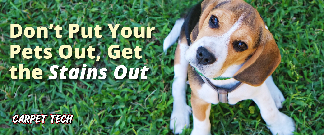 Don't Put Your Pets Out, Get the Stains Out