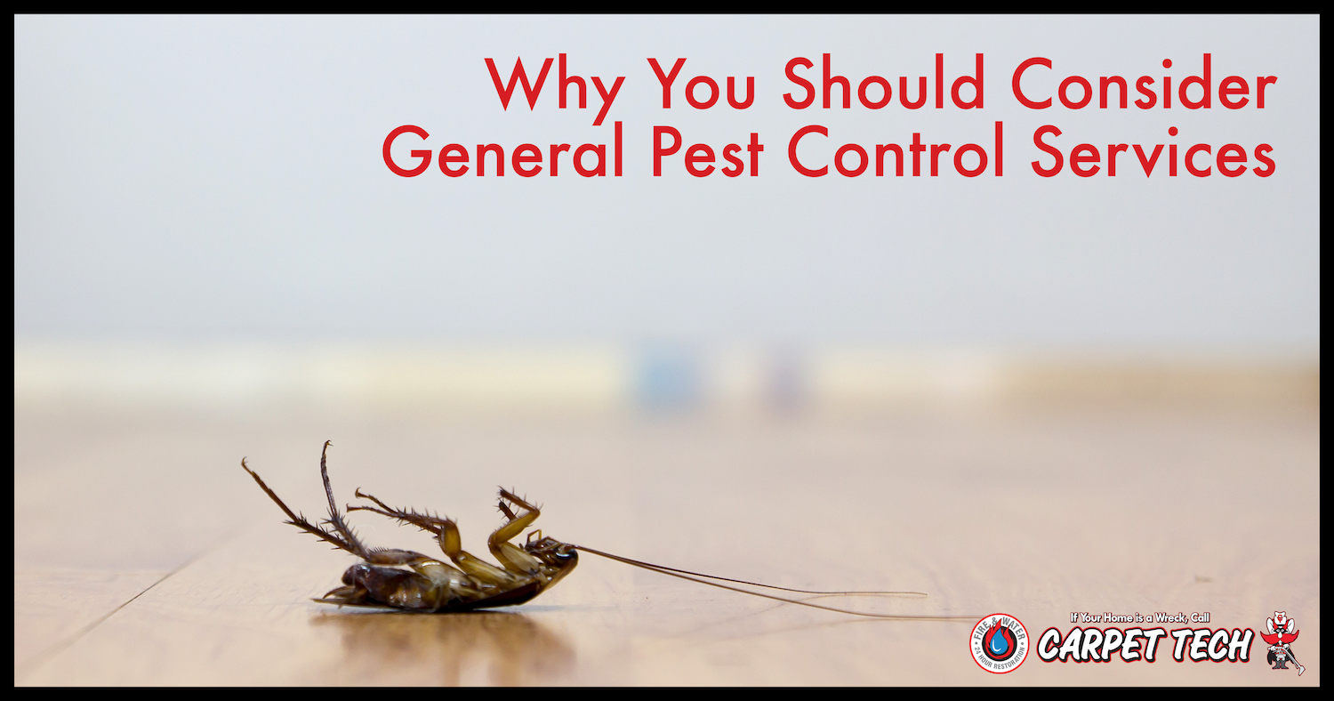 Why You Should Consider General Pest Control Services